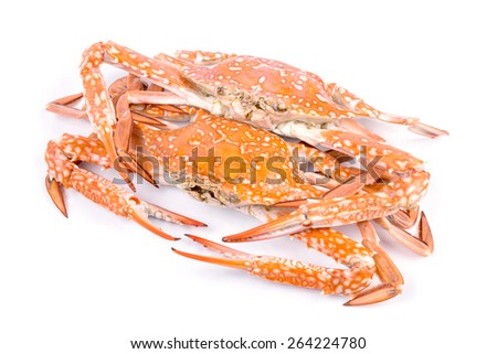 Red crab isolated on white background - stock photo