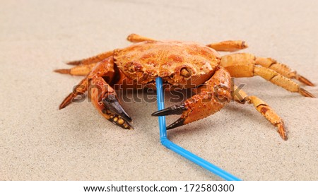 Red crab on sand at beach. close up - stock photo