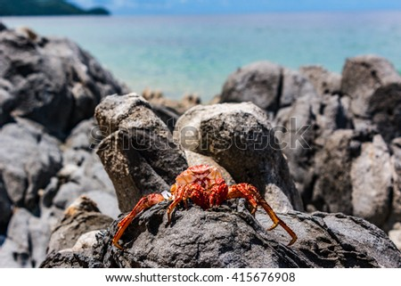 Red Crab Shell on Beach Rocks 2 - stock photo