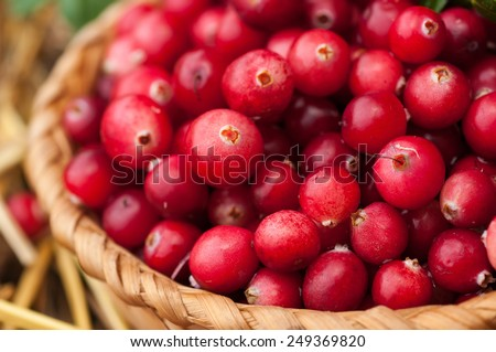 Red cranberries in a basket on straw. - stock photo