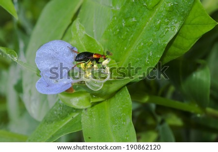 Red cricket bug with a flower, green background - stock photo