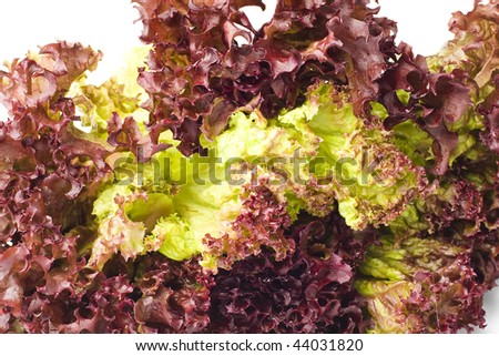 Red Curly Lettuce Leaves - stock photo