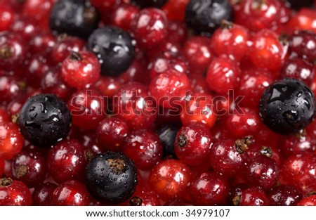 Red currant and black currant with drops of water - stock photo