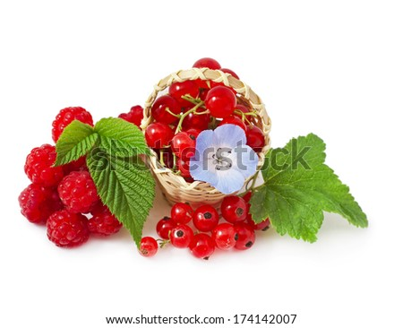 Red currant and raspberry with nemophila blue flower in the basket isolated on white background, close-up