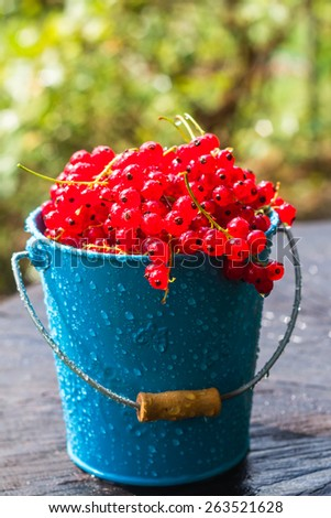 Red currant fruit in a bucket in the summer rain on wooden - stock photo