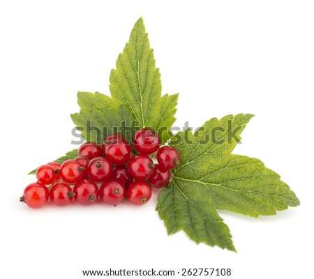 Red currants and green leaves still life isolated on white background - stock photo