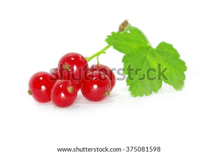 red currants on a white background - stock photo