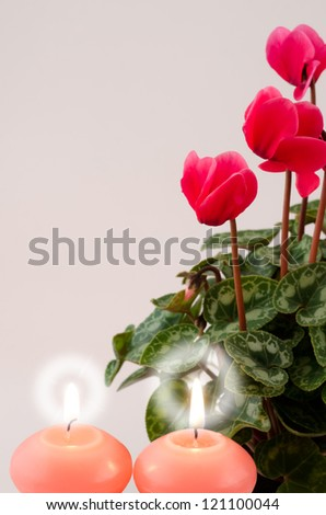 Red cyclamen flowers and candle light in vertical position on gray - stock photo
