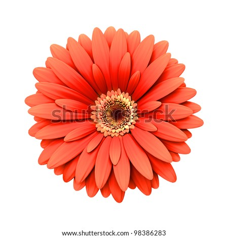 daisy flower stock images, royaltyfree images  vectors, Natural flower