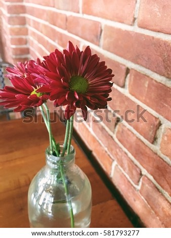 Red daisy with brick wall
