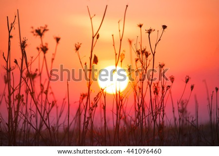 Red Dawn. The sun seen through the stems of the plant.