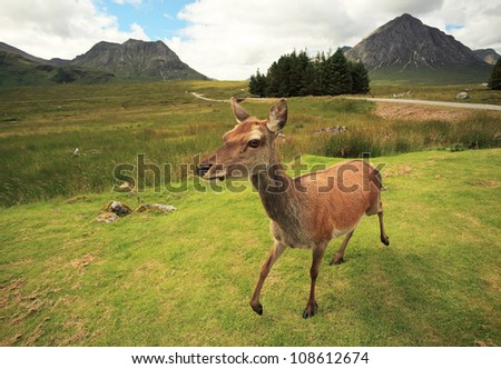 Red Deer and mountain scenery in the Scottish highlands - stock photo