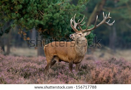 Mating season Stock Photos, Illustrations, and Vector Art