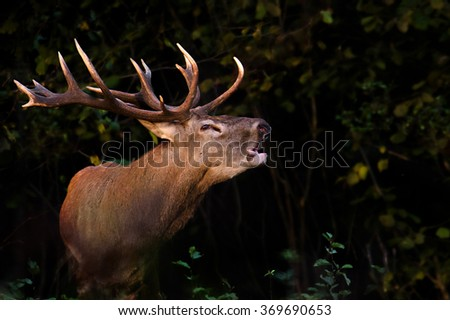 Stag Stock Photos Royalty Free Images Amp Vectors