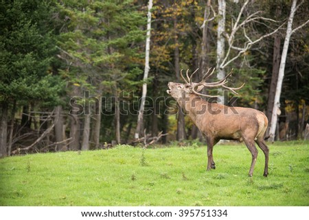 Red deer in the woods - stock photo