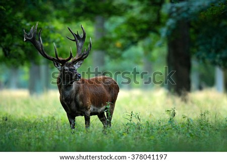 Red deer stag outside autumn forest, animal lying in the grass, nature habitat, Czech Republic