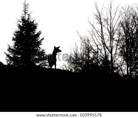 red deer stag without trophy in spring - stock photo