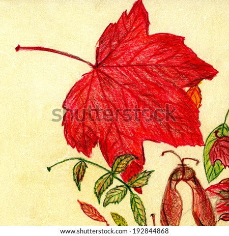 Red detailed maple tree leaf on beige background hand drawn with color pencils  - stock photo
