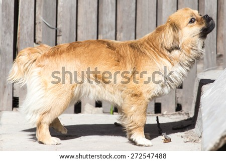 red dog - stock photo