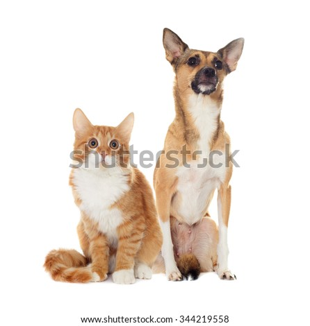red dog and red kitten looking