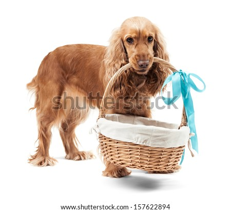 Red dog holding a basket isolated on white