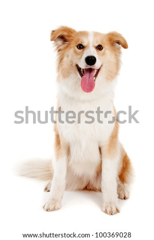 Red dog on white background - stock photo