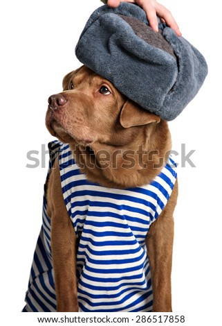 red dog sailor on a white background