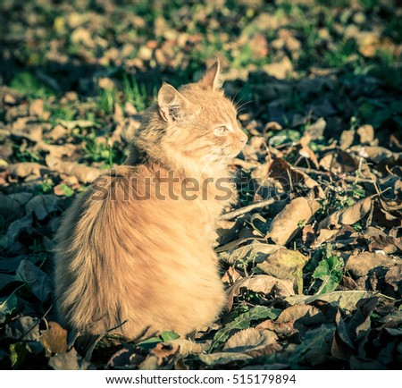 Red domestic tomcat among the grass and leaves