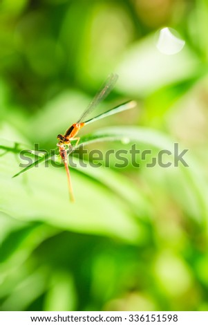 Red dragon fly on green grass