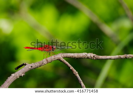 stock-photo-red-dragonfly-on-a-dead-tree