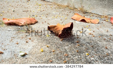 Red dry leaf on cement floor.