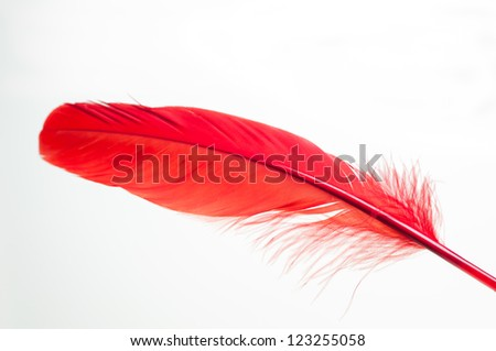 Red duck feather close up - stock photo