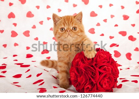 Red Exotic kitten with red rose topiary on valentine heart background - stock photo