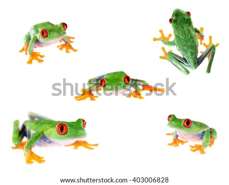 red-eye tree frog  Agalychnis callidryas isolated on white - stock photo