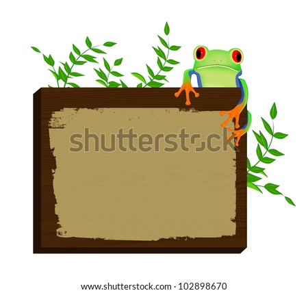 Red eyed tree frog sitting on wood background