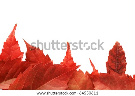 red fall leaves along one side of a white background making a border - stock photo