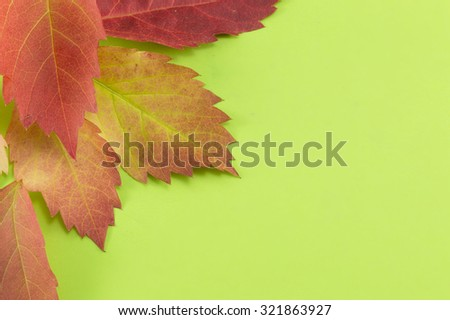 Red fallen autumn leaves background