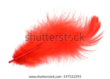 Red feather isolated on white background cutout