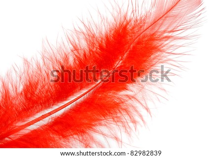 red feather of a bird isolated on a white background