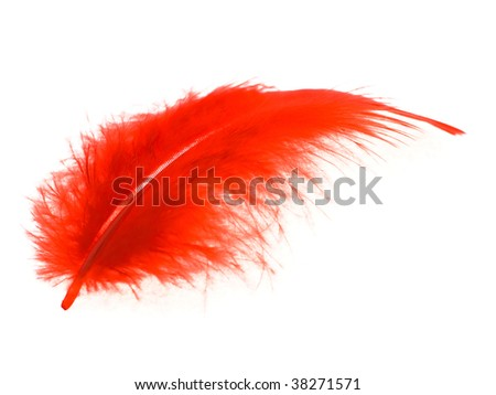 Red feather on a white background