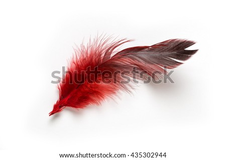 red feather on a white background - stock photo