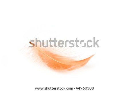 Red feather on white background - stock photo