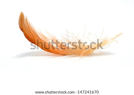 Red feather with reflection  - stock photo