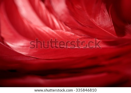 red feathers macro shot beautiful holiday background  - stock photo