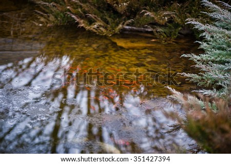 Red fish in a  frozen pond - stock photo