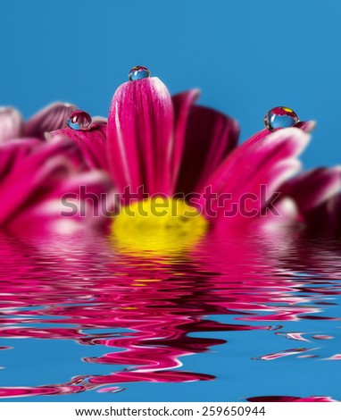 red flower and dew drops on petals - stock photo