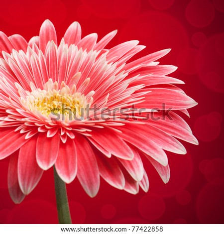 red flower background - stock photo