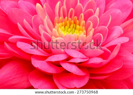 Red  flower close up background - stock photo