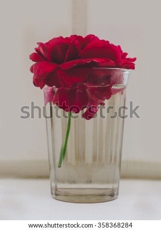 Red flower in glass on the home window - stock photo