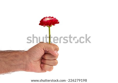 Red flower in man hand fist isolated on white